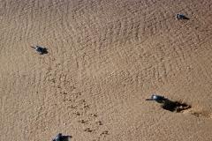 Matapica Kleine schildpadjes Matapica_2