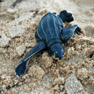 Evening Tour Sea Turtles