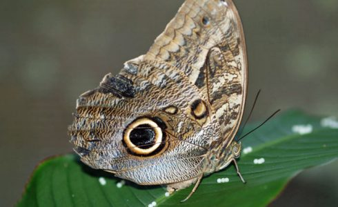 Neotropical Butterfly Park