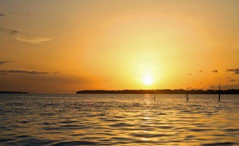 Zonsondergang, dolfijnen en kaaimannen