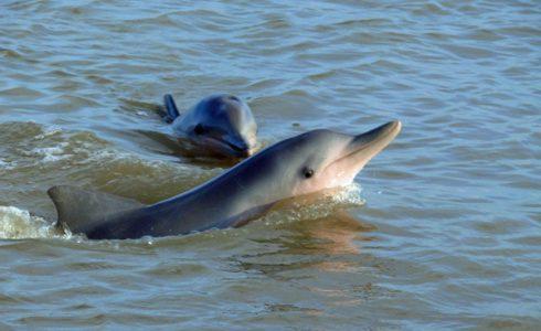 Zonsondergang & Dolfijnen