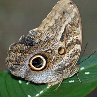 Neotropical Vlinderpark