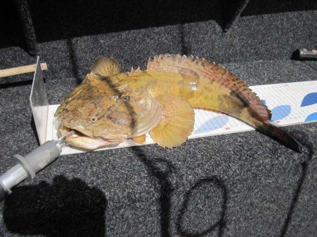 Fishing tour: Suriname river outfall