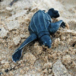 Avondtour zeeschildpadden